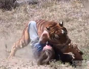 一个头两个大_下一个大老虎将是谁