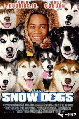 宠知识 | 9大经典狗狗电影,你看过几部?