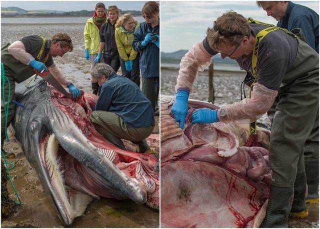 渔夫泥沼边发现巨型鲸鱼尸体,专家现场解剖后死因让人心痛