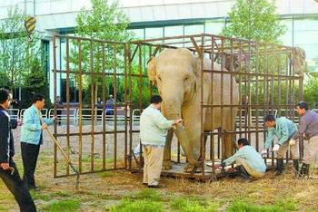 曾经在北京动物园抢大象饲料的孙越!_hao123上网导航