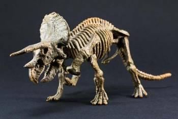 恐龙骨骼化石哪里鉴定交易比较权威?