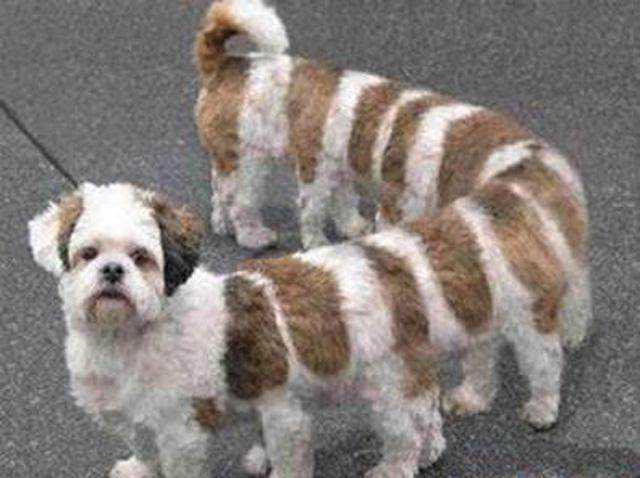 1、多脚狗  看到这个你会不会觉得他是蜈蚣和狗的杂交品种。但其实也没人知道他是不是,如果你哪天看到这种狗就算他不咬人,也许你也会很怕他的。 2、八角盯  其实他的外貌还算好看的,八角盯是乡下人对他的称呼,它的学名好像叫做马鞍毛毛虫,虽然叫他毛毛虫,但是不要小看它,他身上的那些像钉子一样的东西,如果扎了你一下的,你全身都会起疙瘩的,而且非常的痒与痛,这也算是它对自身的一种保护。 3、鱼蟋蟀  这个东西也像是一种杂交的品种,他的头与身子是鱼,可是他的脚却是蟋蟀的脚。奇怪的是它还有尾巴,就像是从鱼身上长出来的