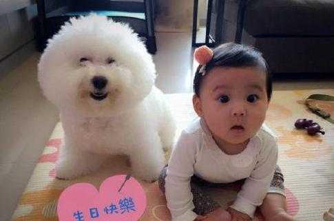 看我们的咘咘可爱还是这个小狗狗可爱,真的是太萌了,胖嘟嘟的大眼睛写