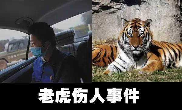 八达岭野生动物园老虎伤人事件的余波