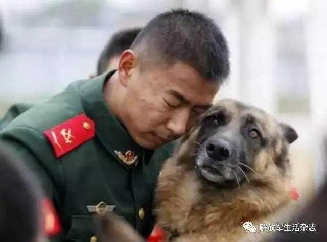 军犬哭囹�a��(�-c_那些让我们落泪的军犬,犬犹如此,兵何以堪