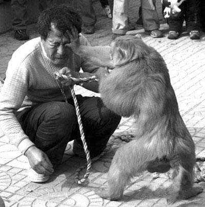 要饭的猴子_之前在街上碰到老头带着个猴子要饭,见他那猴子可爱,就问他猴子能不能