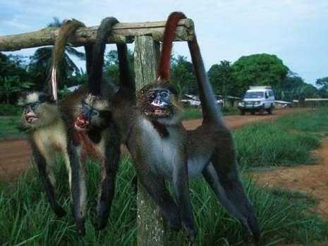 耸人听闻 这些非洲人的食物你敢吃吗?图片