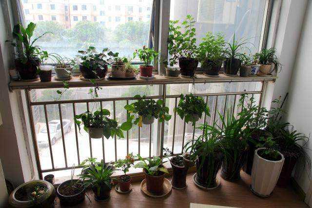 养花:如何利用阳台种花养草,把阳台装饰得更美呢?
