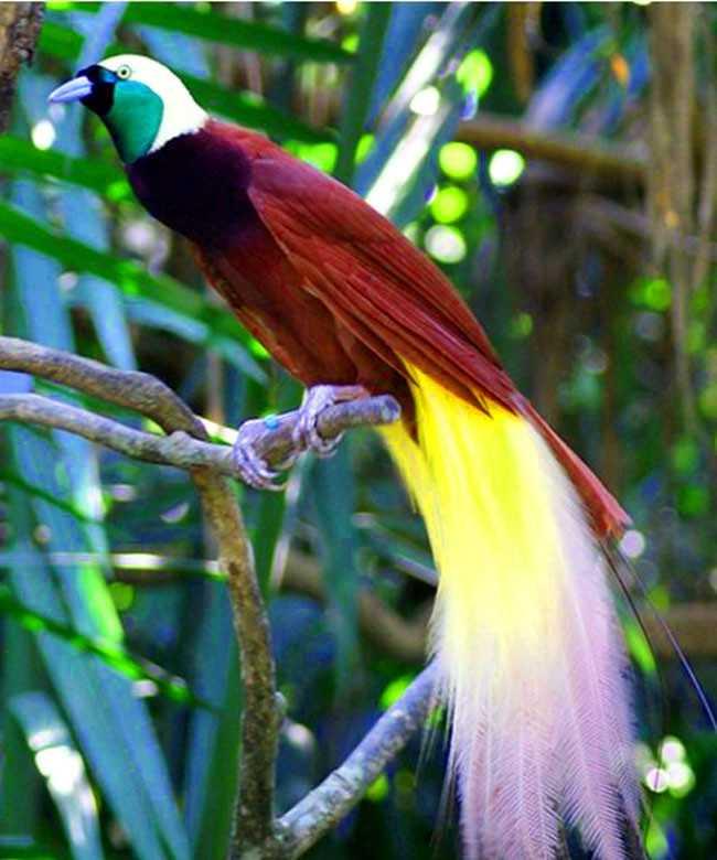 世界上最美的鸟!舞技一流,真是神鸟!