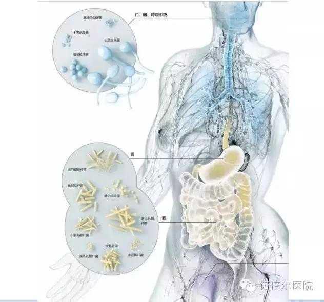 生物人体结构_人体共生微生物组与健康(六)