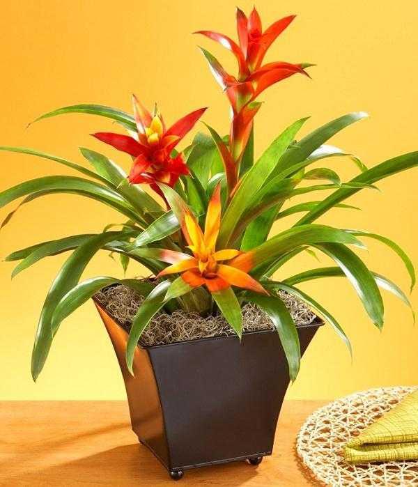 9.凤梨科植物