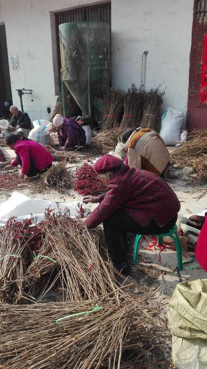 农村人在家怎样才能挣钱_适合在家挣钱的工作-第5张图片