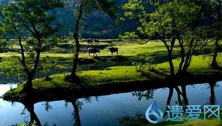 """红安设立自然保护小区 保护""""中国最美小鸟"""""""