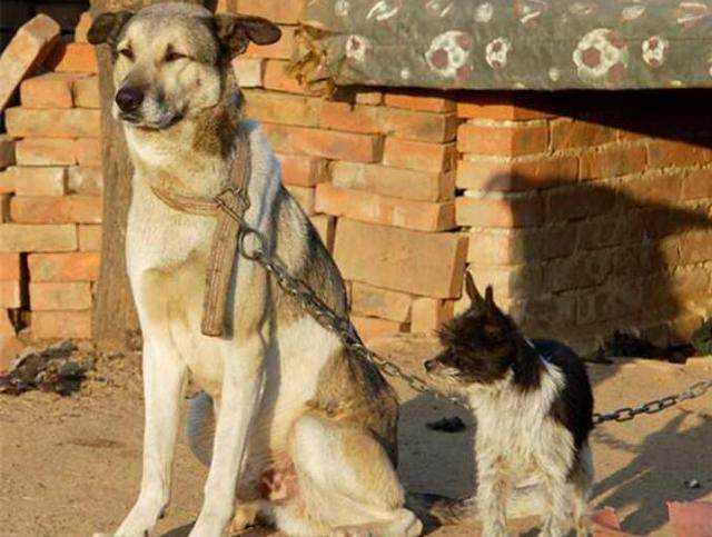 哪种人不能吃狗肉_冬天多少人竟然吃狗肉,到农村偷狗的人也多了,图片不忍看?