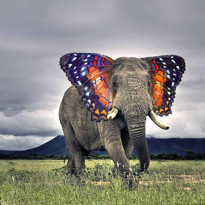 最奇妙的动物组合,被一个能萌翻了-好看
