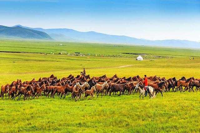四大高原_内蒙古高原是我国四大高原之一,风吹草低见牛羊