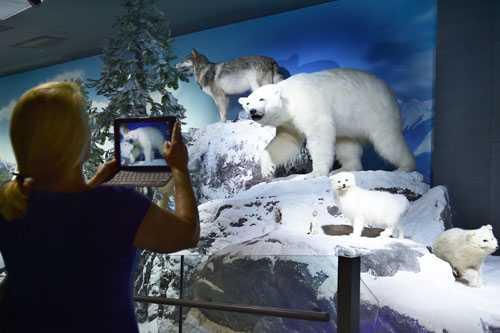 """美媒评""""处境最a处境""""北极熊:中国很多被囚动物世界更糟乐高蝙蝠侠三第6关图片"""