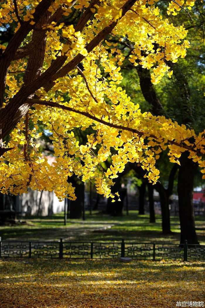 北京故宫的秋天景色美图 晚秋却胜春天好