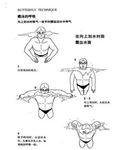 v图文图文之教学蹦床解析蝶泳张阔视频图片
