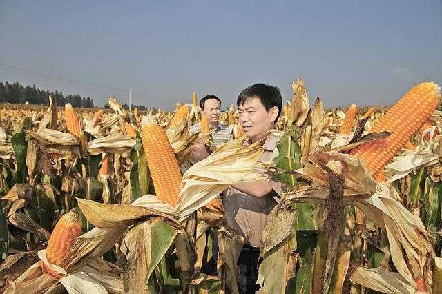 """宣威市强势推进农业现代化,实现粮食产量""""十二""""连增.图片"""