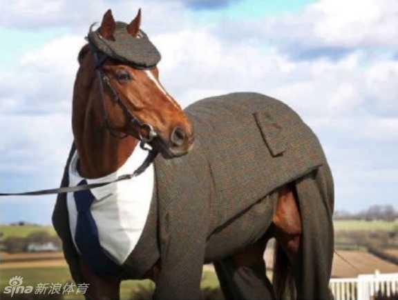 马儿穿西装七分裤太可爱-好看图片