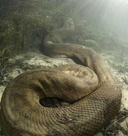 古墓挖出沉睡千年巨蟒:发现者当场吓死 重达