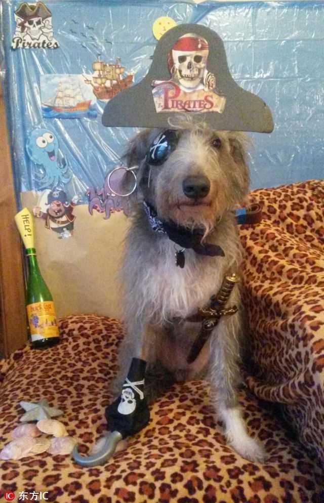 史蒂夫在网络上收获了一大票的粉丝,偶尔它也装扮成海盗狗.