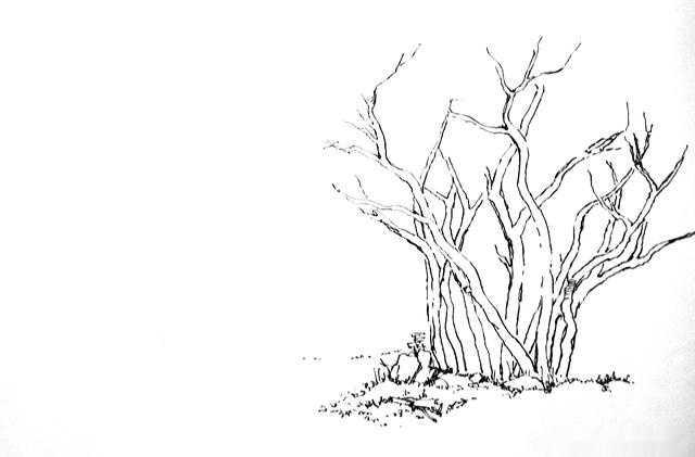 零基础学习速写风景--树的画法二(村头步骤图)