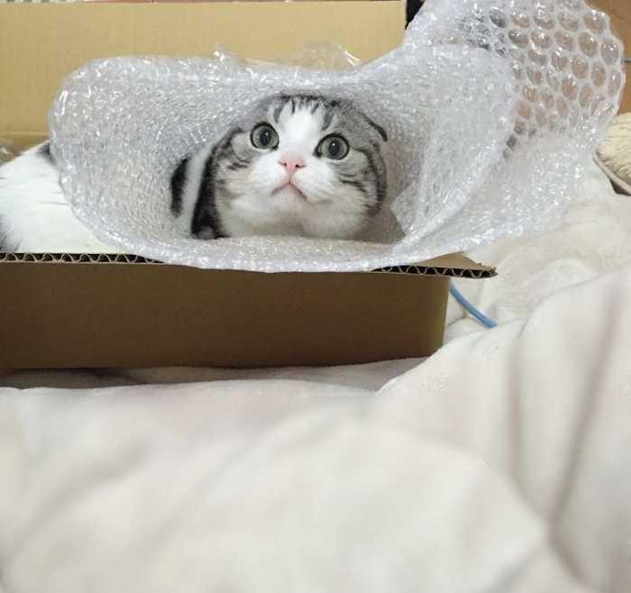 猫咪感冒图片大全可爱