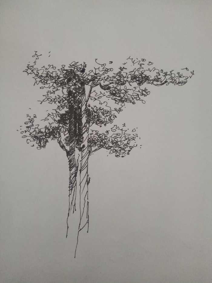 零基础钢笔手绘之园林乔木画法
