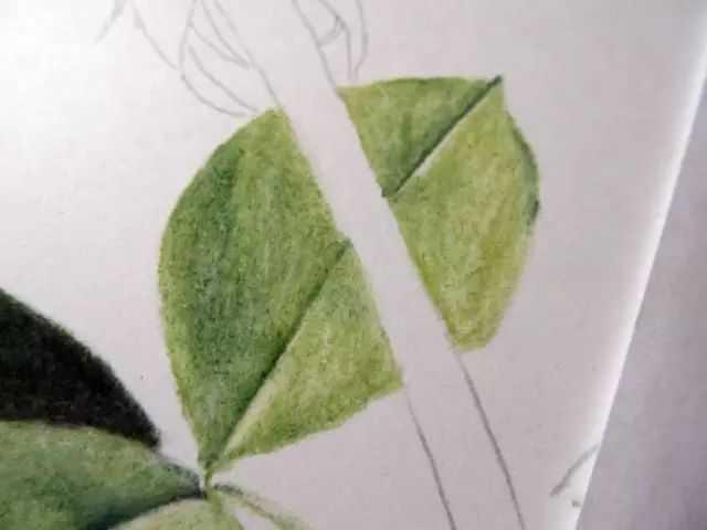 四k纸彩铅画玫瑰花步骤图