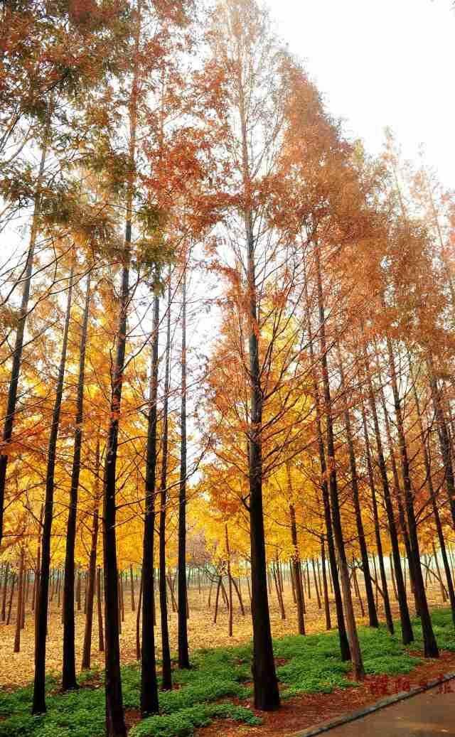 文章详情  这个秋天,去一次老城的明清十字古街,感受老濮阳的悠悠历史