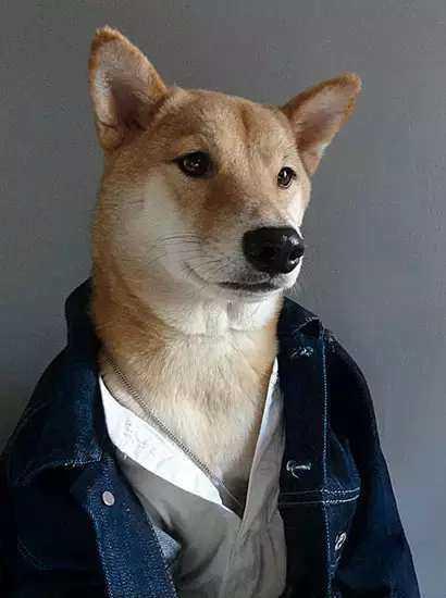 不用谢~(不屑脸) 其实柴犬们不一定都像表情上的那么贱萌,因为它们