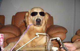 搞笑图:每当看到我家狗狗的表情就忍不住笑.图片