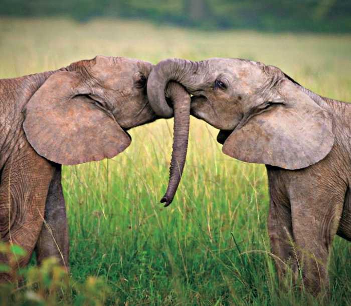 爱无所不在_最温暖人心的照片,爱无所不在,流露在可爱动物之间的爱