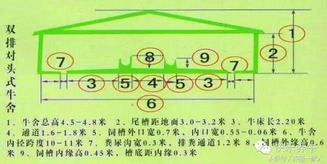社会 文章详情  养牛场设计图(牛舍设计图纸),养牛场建设类型基本一下
