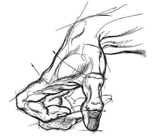 最全的素描手部结构图,超牛 从零基础学素描