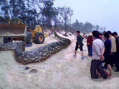 三婆救下一条巨蛇,十年后巨蛇化蛟,送她魂儿一路回家