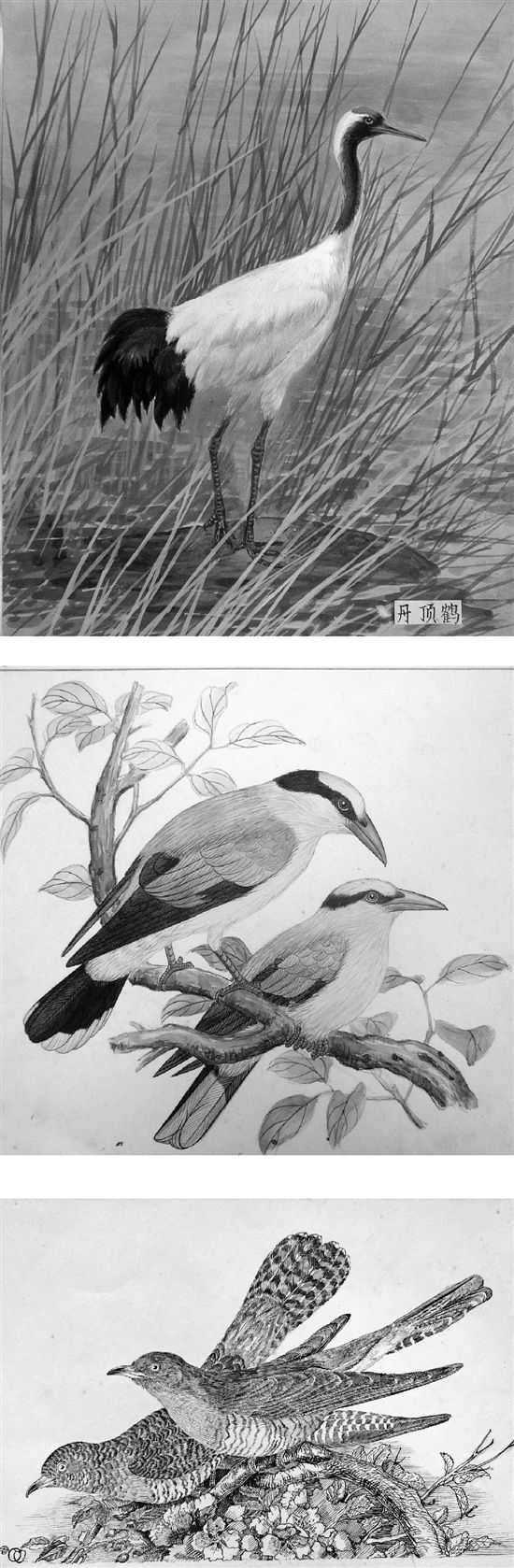 中國畫畫樹畫鳥