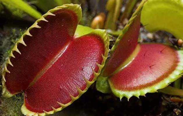 草屁股_两面针,屁股花,这些长得奇怪的植物你见过几个?