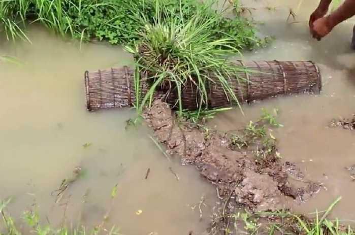 农村男子在池塘的出水口放一笼子,第二天倒出来一看了图片
