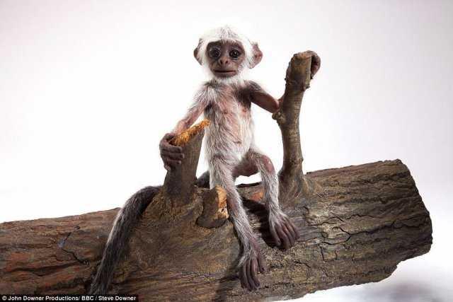 猴子们都跑过来关心和拥抱图片