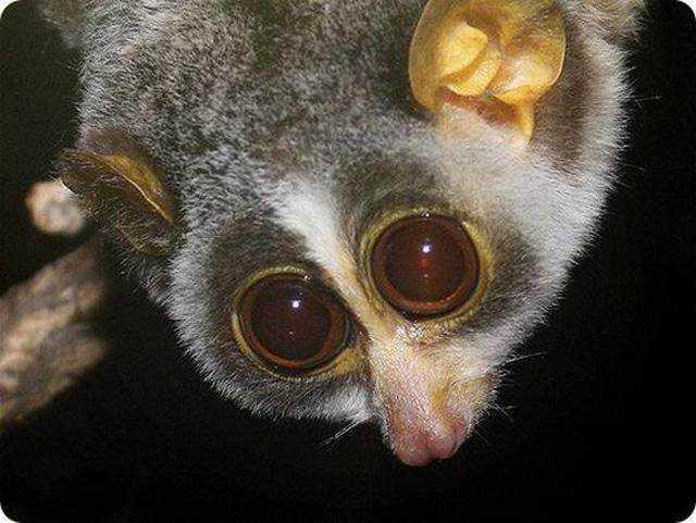 这种动物独特的地方在于他的眼睛