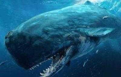 梅尔维尔鲸,最大的动物