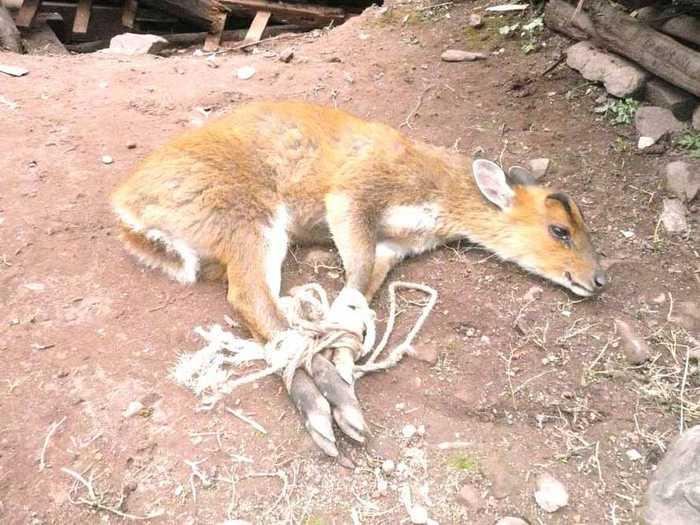 这样的小动物,小时候农村经常见