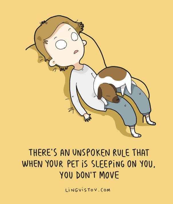 16张超可爱搞笑动物插画