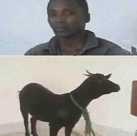 黑人鸡吧奸_屌炸天:山羊居然生了黑人的娃儿,难道黑人基因跟山羊的匹配?