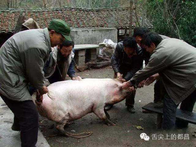 都昌过年杀猪全过程,胆小勿入