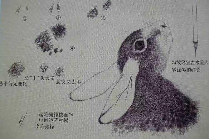 王申勇工笔走兽技法解析牛图片