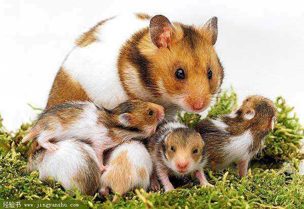 户外动物鼠类有那些照片